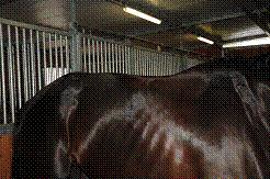 pferd lose kniebänder symptome