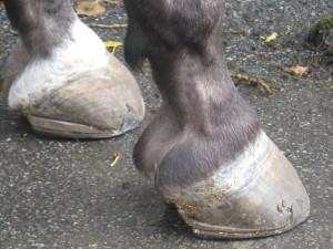 pferd behandlung tetanus